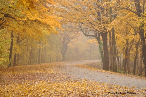 In Search Of Fall Color - Greater St. Louis Area