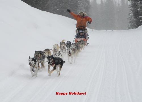Dog Sledding In Wyoming